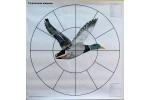 Мишень 16-дольная Селезень 800*800мм, 80г/м (1шт)